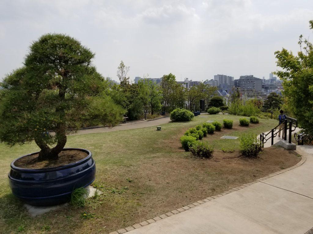 目黒天空庭園の芝生