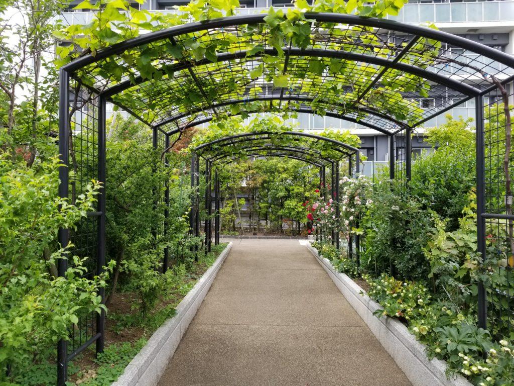 目黒天空庭園の植物