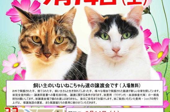猫の譲渡会のチラシ