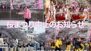 桜祭り中止のお知らせ