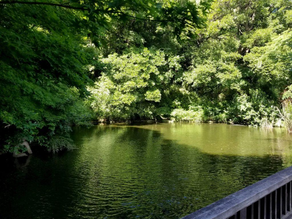 菅刈公園の庭園の池